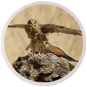 Common Kestrel Falco Tinnunculus Round Beach Towel
