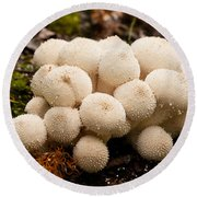 Common Puffball Mushrooms Lycoperdon Perlatum Round Beach Towel