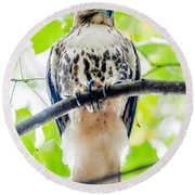 Coopers Hawk Perched On Tree Watching For Small Prey Round Beach Towel