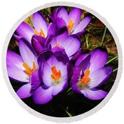 Crocus Flower Round Beach Towel