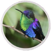 Crowned Woodnymph Hummingbird Male Round Beach Towel