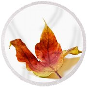 Curled Autumn Leaf Isolated On White Round Beach Towel