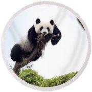 Cute Young Panda Round Beach Towel