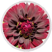 Dahlia Named Black Wizard Round Beach Towel