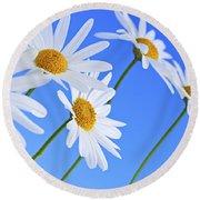 Daisy Flowers On Blue Background Round Beach Towel
