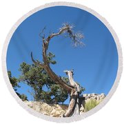 Dead Tree At Grand Canyon Round Beach Towel