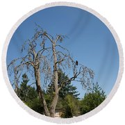 Dead Tree With Crow Round Beach Towel