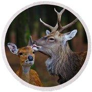 Deer Love Round Beach Towel