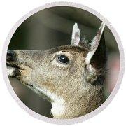 Deer Sunshine Profile Round Beach Towel