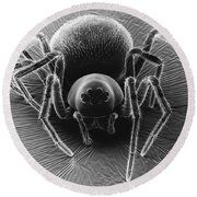Dictynid Spider Round Beach Towel