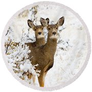 Doe Mule Deer In Snow Round Beach Towel