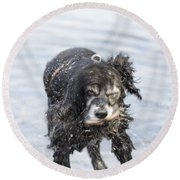 Dog Shake Round Beach Towel