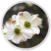 Dogwood Blooms Round Beach Towel