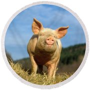 Domestic Pig Round Beach Towel