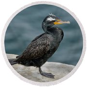 Double-crested Cormorant Round Beach Towel