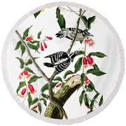 Downy Woodpecker Round Beach Towel by Celestial Images