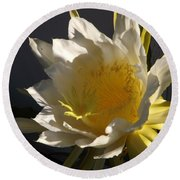 Dragon Fruit Blossom In Profile Round Beach Towel