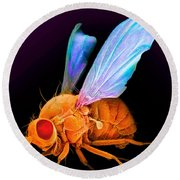 Drosophila Round Beach Towel