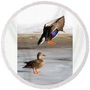 Ducking Around Round Beach Towel