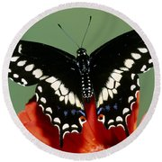 Eastern Black Swallowtail Butterfly Round Beach Towel