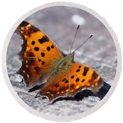 Eastern Comma Butterfly Round Beach Towel