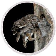 Eastern Screech Owls At Nest Round Beach Towel