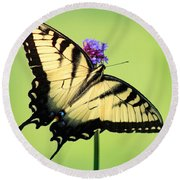 Eastern Tiger Swallowtail Butterfly Square Round Beach Towel