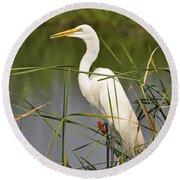 Egret In The Cattails Round Beach Towel