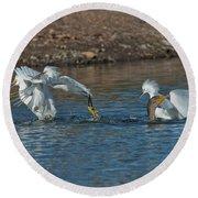 Egrets Robbing A Cormorant Round Beach Towel