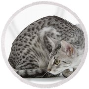 Egyptian Mau Cat Round Beach Towel