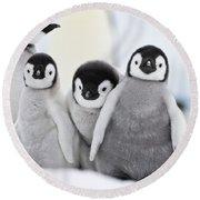 Emperor Penguin Chicks Round Beach Towel