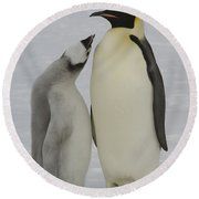 Emperor Penguins Round Beach Towel