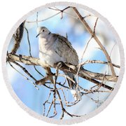 Eurasian Collard Dove Round Beach Towel