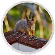 Eurasian Red Squirrel Round Beach Towel