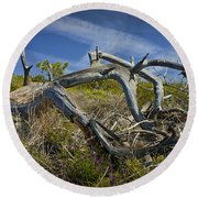 Fallen Dead Torrey Pine Trunk At Torrey Pines State Natural Reserve Round Beach Towel