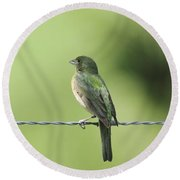 Female Painted Bunting Round Beach Towel