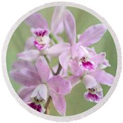 Five Beautiful Pink Orchids Round Beach Towel