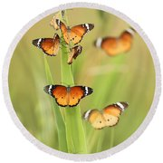 Flock Of Plain Tiger Danaus Chrysippus Round Beach Towel by Alon Meir