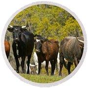 Florida Spanish Cattle Round Beach Towel