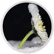 Flower With Snow Round Beach Towel