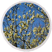 Fluffy Catkins At At Tree Against Blue Sky Round Beach Towel