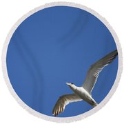 Flying Crested Tern Round Beach Towel