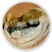 Fossil Clam With Calcite Crystals Round Beach Towel