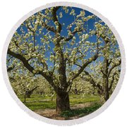 Fruit Orchard Round Beach Towel