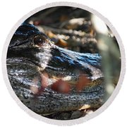 Gator In The Shade Round Beach Towel