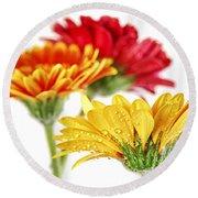 Gerbera Flowers Round Beach Towel