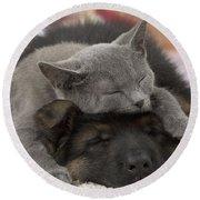 German Shepherd And Chartreux Kitten Round Beach Towel