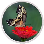 Giant Swallowtail Round Beach Towel