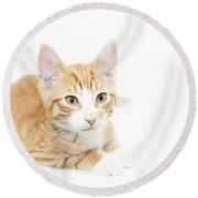 Ginger Kitten  Round Beach Towel
