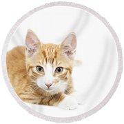 Ginger Kitten Staring Round Beach Towel